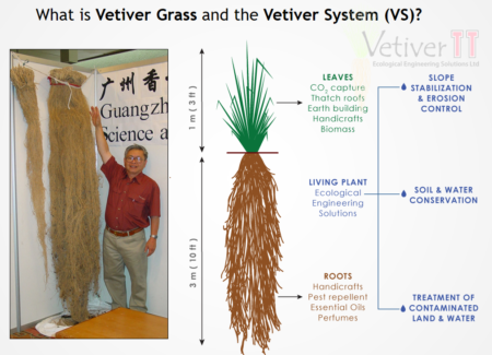Vetiver System (VS) graphic